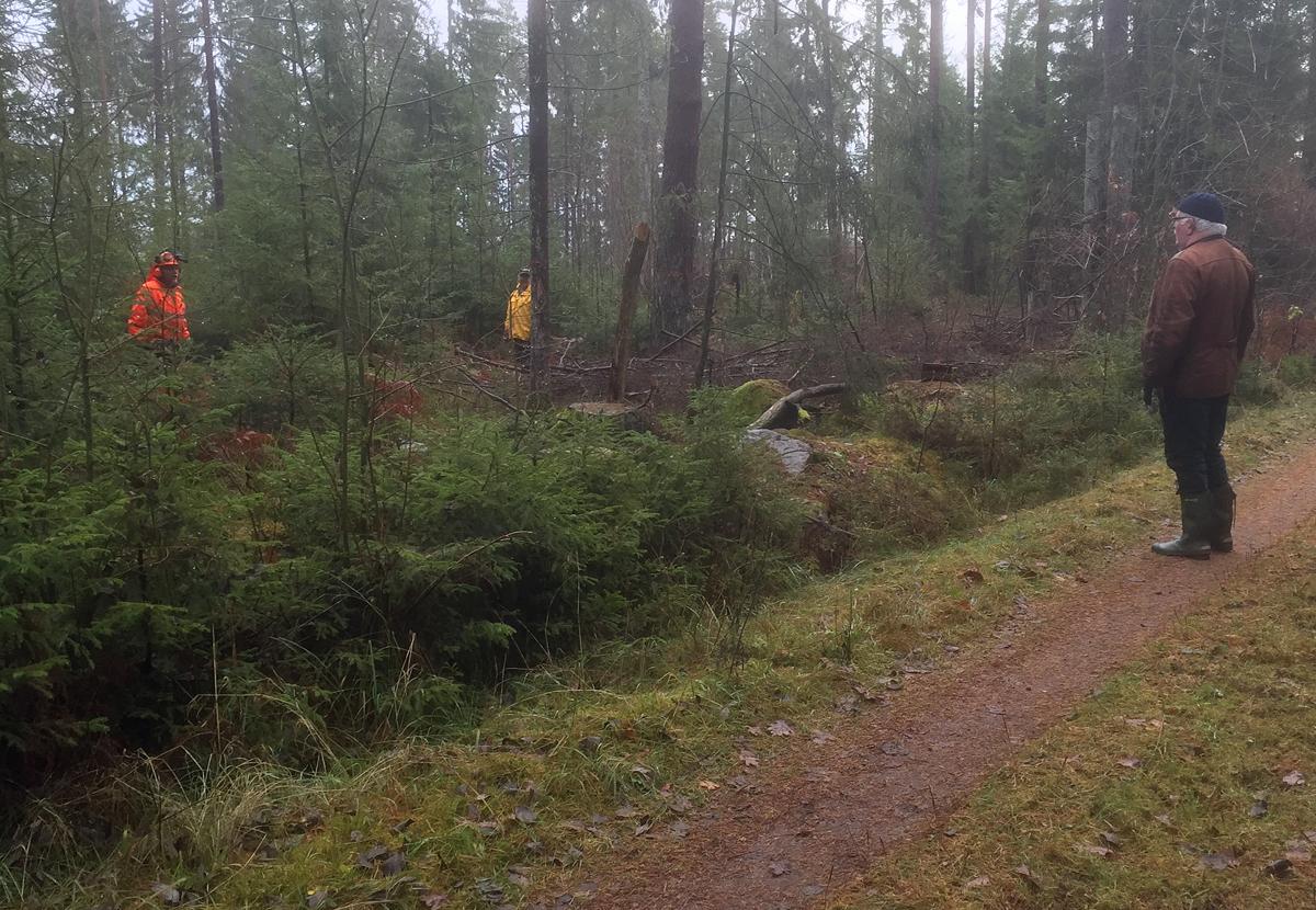 skogshuggning-1