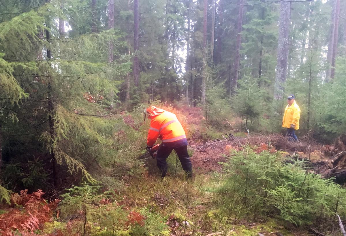 skogshuggning-2